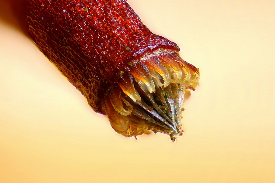Up Close Bees Eye Takes Nikon Imaging Top Prize 6